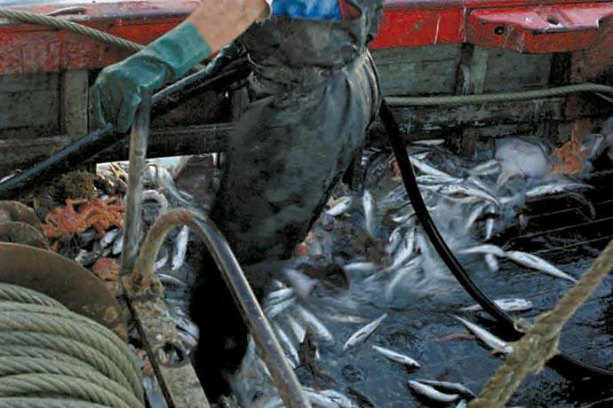 pesca-langostino-y-merluza-revista-puerto-datos
