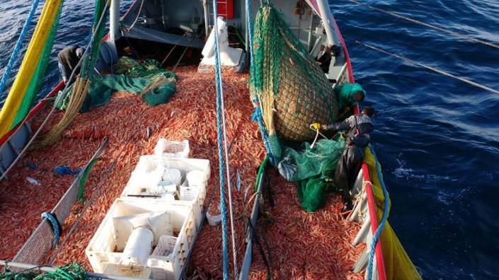 pesca-langostino-gurises_facundo_uribe