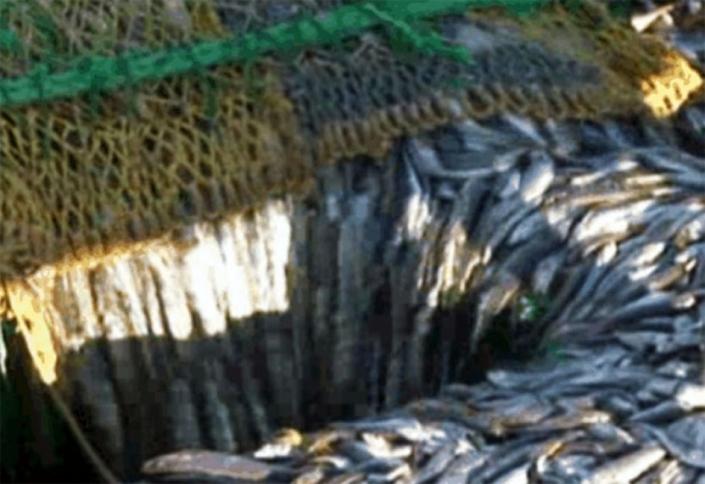pesca_merluza_cola-960x650