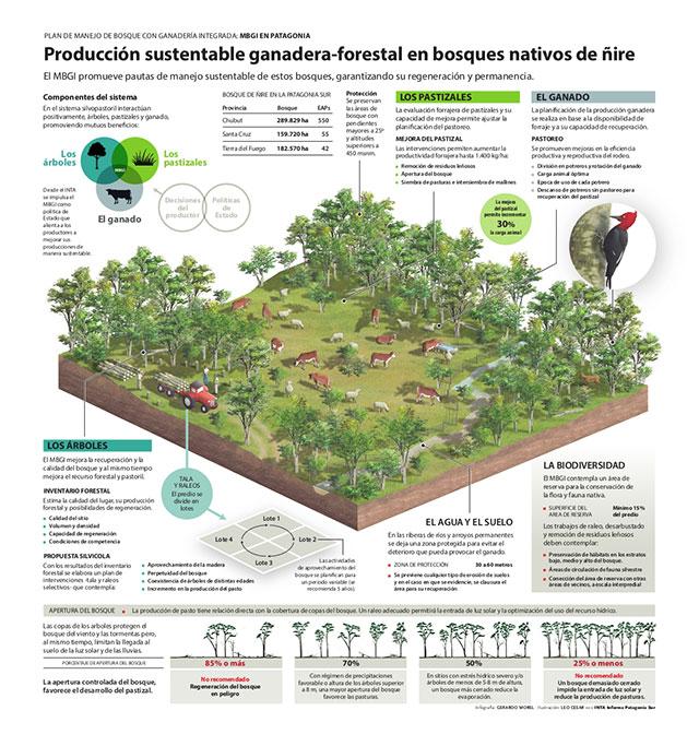 Infografía extraída del INTA Patagonia Sur Informa.