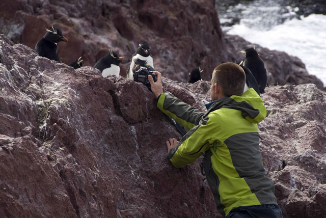 pd-isla-pinguino